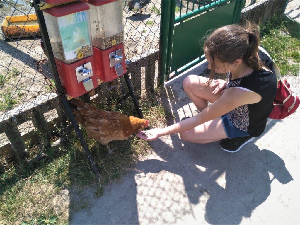 kurka zmini zoo