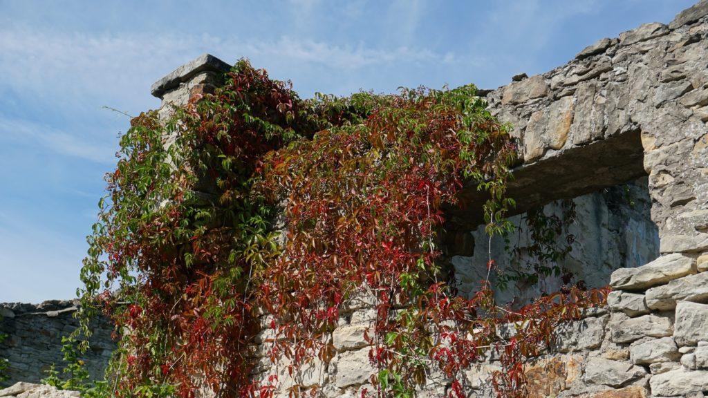 rośliny przy pałacu Schoenberga wWąchocku